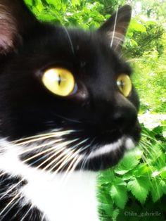 My cat by GabrielleBlin.deviantart.com