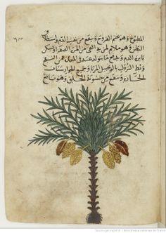 Ibn Faḍl Allāh al-ʿUmarī , Masālik al-abṣār fī mamālik al-amṣār