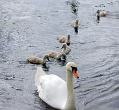 Little ones following Mommy. What a beautiful family!!
