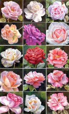 Mostly pink roses - Paintings