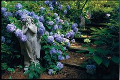 Inspired by beautiful blossoms, Wendy White transformed a wooded slope into a garden of flowers. Planting Flowers, Plants, Garden, Growing Hydrangeas, Lawn Alternatives, Big Plants, Smooth Hydrangea, Rock Garden Landscaping, Garden Care
