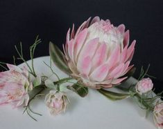 South African Protea flower display