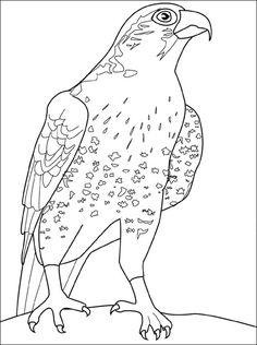 Ausmalbilder Falke