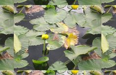 'Water Lily Pads' Laptop Skin by MsSexyBetsy Water Lilies, Laptop Skin, Artsy Fartsy, Plant Leaves, Vibrant Colors, Bubbles, Lily, Promotion, Plants