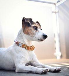 Unsere individuell für deinen Hund gefertigten Halsbänder und Leinen sind für große und kleine Hunde geeignet - designe ganz einfach deine Lieblingskombi! Pawsome Hundezubehör | nachhaltig Animals, Instagram, Pictures, Dog Care, Dog Leash, Dog Accessories, Small Dogs, Sustainability, Linen Fabric