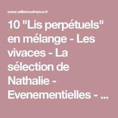 """10 """"Lis perpétuels"""" en mélange - Les vivaces - La sélection de Nathalie - Evenementielles - Boutique"""
