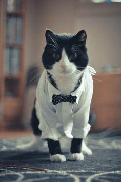 ネクタイを締めてちょっとお父さんっぽくなったネコ画像20枚 - GIGAZINE
