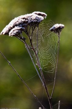 Spider web on a flower #outdoors #spiders