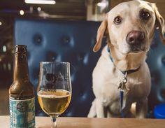 ブリュードッグのバーでも  犬の同伴OKのところもあるそうです。