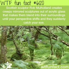 wtf fun facts is a blog for interesting funniest facts we post about i just like it pinterest wtf fun facts and funny facts - Strange Halloween Facts