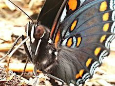 Up close butterfly