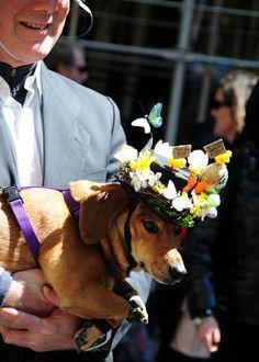 Easter Bonnet Parade 2009 rough times dog copy low res