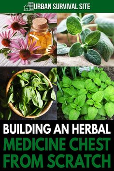 You can take care of many common ailments effectively, inexpensively – and most importantly, naturally – by stocking the ingredients in an herbal medicine chest. Health Remedies, Home Remedies, Natural Remedies, Emergency Preparation, Emergency Preparedness, Urban Survival, Survival Tips, Living Off The Land, Wild Edibles