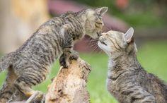 """""""O GRITO DO BICHO"""": Fotos incríveis da vida secreta dos gatos de rua"""