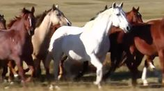 Each year, more than 100,000 American horses — working, racing and companion horses and even children's ponies — are inhumanely transported long distances in cramped trailers without food, water or rest. Then they are brutally slaughtered, and their meat is shipped overseas for human consumption. The majority of these horses are young, healthy animals who could have led productive lives with loving owners if they'd been given the chance.
