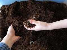 worm composting troubleshooting- I <3 my composting worms!