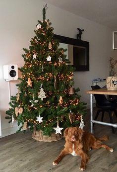 Toller James ( 7,5 mnd) bewaker van de Kerstboom!!