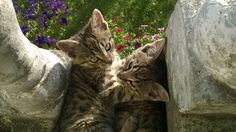 My little cats ❤ Bogdan and Richard 😍