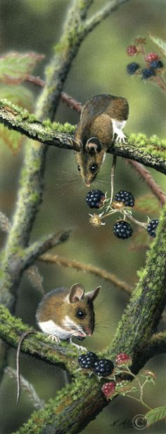 Woodmice (Sold) | Gallery | Wildlife Artist Nigel Artingstall