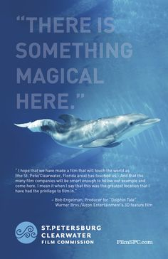 """Winter"" the Dolphin, St. Petersburg/Clearwater, Clearwater Marine Aquarium - So looking forward to watching Sydney watch Winter. Clearwater Marine Aquarium, Clearwater Florida, Florida Beaches, Dolphin Quotes, Dolphin Tale, Bottlenose Dolphin, Marine Biology, Saltwater Aquarium, Winter Photos"