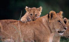 30+ Amazing Animal Traits! | Care2 Healthy Living