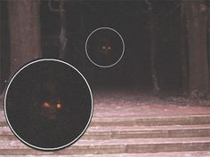 This is an anonymous picture of a demon someone took at a park one night. I've tried my own image editing techniques to try and draw it out more but to no avail. What do you guys think? Demon or no?