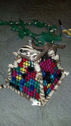Sinbad was confused but intrigued by the new pom pom pit I made for him and my other sugar gliders.