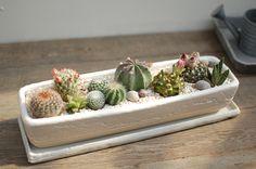 【楽天市場】【サボテン・多肉植物 寄せ植え(母の日限定)/ツートンロングレクト】:サボテン・多肉植物 SabotenStyle