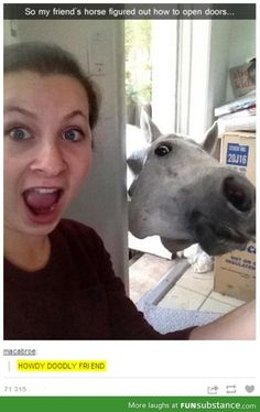 Enjoy the meme 'Lel' uploaded by The_Raggedy_Man. Memedroid: the best site to see, rate and share funny memes! Funny Horse Memes, Funny Horses, Funny Animal Memes, Cute Funny Animals, Funny Animal Pictures, Funny Cute, The Funny, Funny Memes, Hilarious Pictures