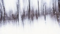 """Multiple Exposures Photography of Finland Woods  Christoffer Relander is a former Finnish painter and a photographer. In a picture series named """"Oil Exposures"""" he wanted to give an effect that is similar to painting through a multi-exposition technique. He immortalized Finnish woods with three different cameras to have different tunings to come up to the hoping result."""
