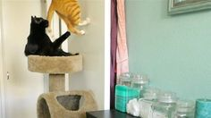 The secret life of cats! … Ever wondered what your cats get up to when you leave?