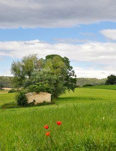 Prairie - Lurs (Alpes-de-Haute-Provence)