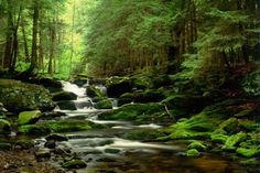 Green Forest and Beautiful River Wall Murals for Living Room Decorating Ideas