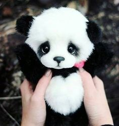 The love of panda The love of panda - Monde Des Animaux Cute Panda Baby, Baby Animals Super Cute, Baby Panda Bears, Cute Little Animals, Cute Funny Animals, Cute Cats, Baby Pandas, Baby Animals Pictures, Cute Animal Pictures