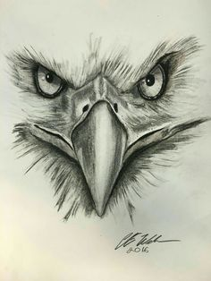 Bird Drawings, Pencil Art Drawings, Cool Art Drawings, Art Drawings Sketches, Animal Drawings, Tattoo Drawings, Drawing Ideas, Adorable Drawings, Drawing Drawing