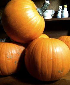 50 Best Pumpkin Recipes on the Internet