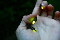 I know what lightning bugs,(fireflies),are,and that looks like a glow-in-the-dark caterpillar!