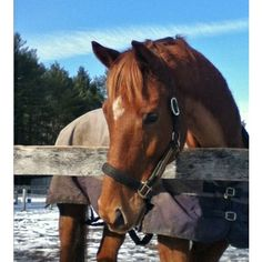 Controlling the Barrel Horse - Top barrel racer Molly Powell shares her secrets to overcoming pre- and post-barrel run misbehavior.