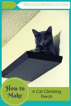 Cat scratching post how to keep calm and love your kitty for Jackson galaxy petsmart