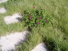 grasses between flagstones
