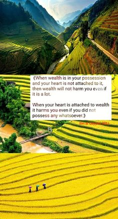 Your Heart, Wealth, Vineyard, Islamic Quotes, Outdoor, Outdoors, Vine Yard, Vineyard Vines, Outdoor Games