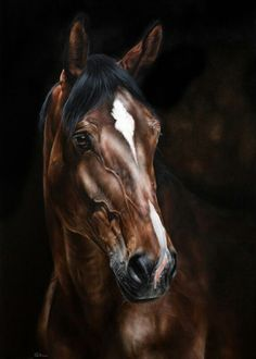 Beautiful pastels by Marion Tubiana - Fabienne Bertschinger - - Magnifiques pastels de Marion Tubiana Beautiful pastels by Marion Tubiana Más Pretty Horses, Horse Love, Beautiful Horses, Horse Drawings, Animal Drawings, Arte Equina, Horse Oil Painting, Realistic Oil Painting, Knife Painting