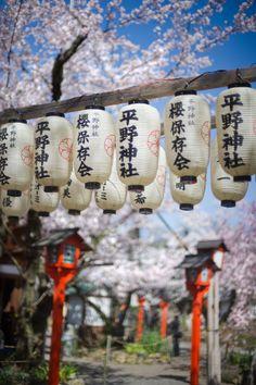Lamps and Cherry Blossom, Hirano Shrine, Kyoto, Japan