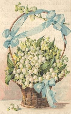 Basket of LILIES of the VALLEY Blue BOWS | Our Cottage Garden