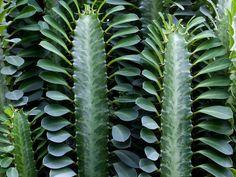 Real Jardín Botánico de Madrid | Cactus