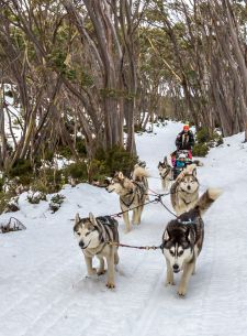 Howling Husky Sled Dog Tours at Mt Baw Baw - what an amazing experience!