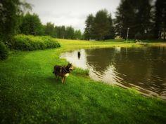 Karvanopat aamupesulla. #pooch #mutt #dog #pond #jamespond #t #fb