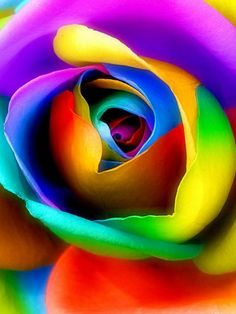 *Rainbow Rose ~ up close and personal :)