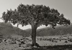 Best of Weekend 2019 : Beth Moon - Socotra - The Eye of Photography Magazine Socotra, Moon Photography, Paris Photography, Photography Magazine, Paris France, Sacred Groves, Sacred Plant, Bottle Trees, Deep Forest