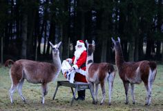 Nothing to see here folks...just Santa delivering llama presents